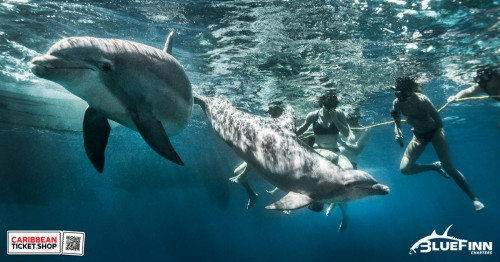 Snorkel trip with dolphins