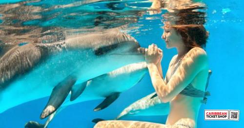 Dolphin Snorkel