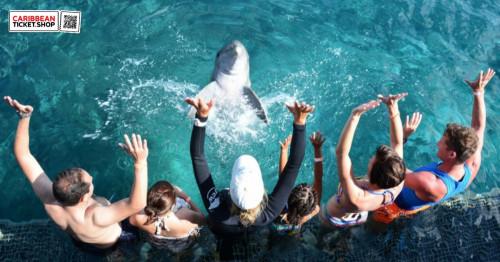 Dolphin Encounter